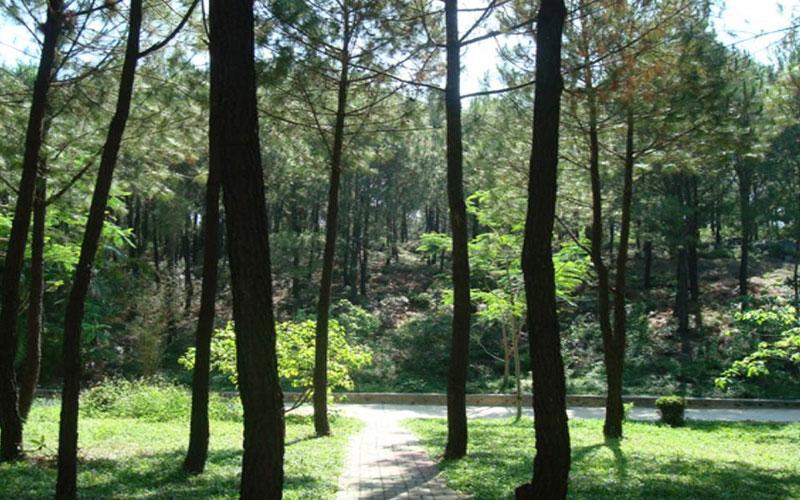 Những thắng cảnh bạn không thể bỏ qua khi đến Phố núi Pleiku - Gia Lai