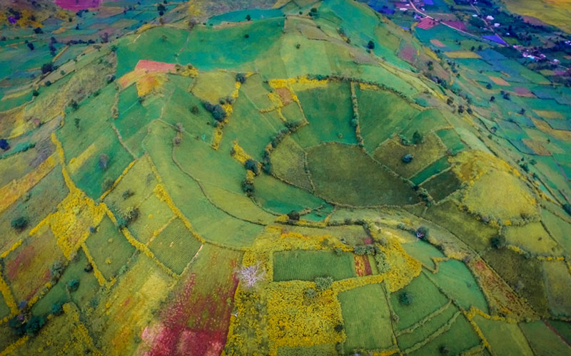 Wildflowers season on crater in Gia Lai